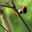 夏場の南の島へのハイリスクの鳥撮り・・・