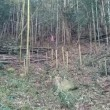 竹林、傾斜でてくる!