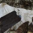 早朝のタケノコ掘りで、必須アイテムの道具が壊れてしまいました