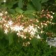 残暑の中の花