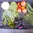 今日の収穫 トマト キュウリ ニラ ナス トウガラシ類 オクラ キャベツ うまい菜