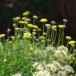 黄色い小花のバスケット