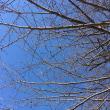 午後散歩~春の気配