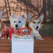 4歳のお誕生日会