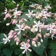 季節の花「臭木(くさき)」