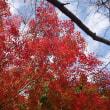 今が最高!万博記念公園の紅葉!!