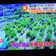 5/23 桜の葉の産地は静岡