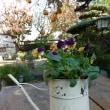 春になって道志に移植する花の苗を育てています