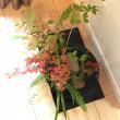 植物の香りの講座、と、秋の花アレンジメント