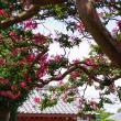 辻町の夏色 本興寺 百日紅を訪ねて