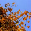 『街は秋色 ♪ 』