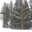 春まだ浅し雪の里