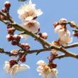 春の日差しに誘われて・・・「レトロカフェ 長久堂」・・・・!!!