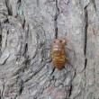 セミの幼虫の木登り