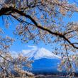 河口湖の桜 2018 その1