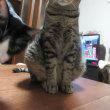 猫とヘアブラシの日