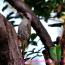 二日連続での野鳥散策(野鳥フォト-50)