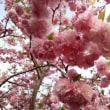 ♪春風にさそわれて・・・(*^。^*)