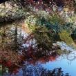モネの庭の池2