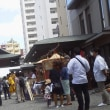 北海道神宮例大祭(札幌まつり) 神輿渡行の様子(写真)  6月16日 お馬さんもお昼休み