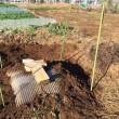 サトイモの保存方法