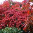 先週の土曜日に箱根の紅葉を見て参りました