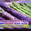 5/19・・・旅サラダプレゼント(本日正午まで)