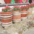 花いっぱい H30-12-12 ㈬ 曇