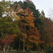 水元公園へ散歩