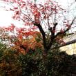 西の丸公園からの今の風景➡︎櫨の木の紅葉は??