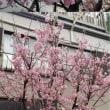 ひな祭り・梅・桜・開花