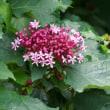 早くも夏の花-2
