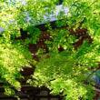 緑に酔う-京都市左京区:鞍馬寺