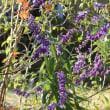 寄せ植え2種&お庭の注意点・・・