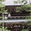 天橋立の松並木の本数は何本?
