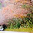 171121 快晴極寒の中、中津、耶馬渓紅葉、バス撮影ツアー、山国カカシワールドで思わぬアクシデント!!