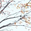 「惜秋!」 いわき 夏井川渓谷にて撮影! 紅葉