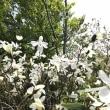 今年も花の浮島…佐渡島!