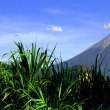 フエゴ火山(グアテマラ)
