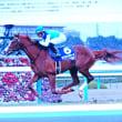 12/18 昨日投稿できなかった この馬、ナイツが選んだ馬だと