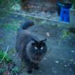 【Dec_28】Humphreys家はネコだらけ