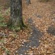 晩秋の泉ヶ岳キャンプ場周辺の森