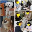 イベント報告【犬猫と人の自然療法フェスタ】開催しました♪  犬のしつけ教室@アロハドギー
