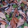 近場で紅葉を見に行きました