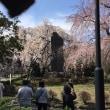 春 東郷寺