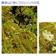 草花を撮る・北から南へ12 北関東の山2 -皇海山-