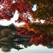 ◎◎ 岡山後楽園の紅葉を満喫 ◎◎
