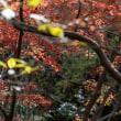 燃ゆる獅子舞【秋色鎌倉2018】晩秋の鎌倉でみた紅葉