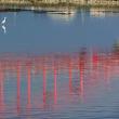 水に映る赤い橋