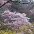 お花見会は4月15日に延期しました